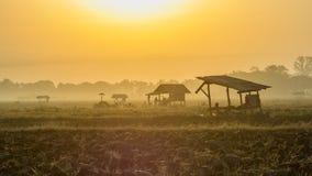 Asiatische Reisfelder und Landwirthütte im Winter als Sonnenaufgang Lizenzfreies Stockbild