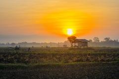 Asiatische Reisfelder und Landwirthütte im Winter als Sonnenaufgang Lizenzfreie Stockfotografie