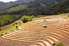Asiatische Reisfeldsüdterrassen. Stockbild