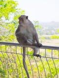 Asiatischer Affe der großen Mutter sitzen auf der Bahnbrücke Lizenzfreies Stockfoto