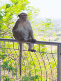 Asiatischer Affe der großen Mutter sitzen auf der Bahnbrücke Lizenzfreies Stockbild