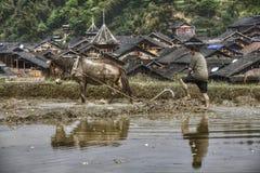 Asiatischer Bauer pflügt das Land unter Verwendung der Energie des Pferds, China Stockbilder