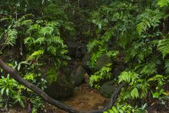 Asiatischer Dschungel Stockfotografie
