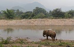 Asiatischer Elefant durch den Fluss in Thailand lizenzfreie stockfotografie