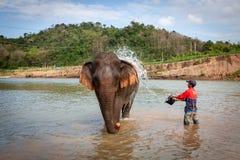 Asiatischer Elefant Elephas maximus, das in einen Flottenflu? nahe Luang Prabang geht stockbild
