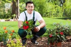 Asiatischer Gärtner, der Blumen pflanzt Stockbild