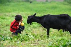Asiatischer Junge und schwarze Ziege Lizenzfreie Stockbilder