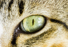 Asiatischer Katzenaugenabschluß oben Lizenzfreie Stockfotos