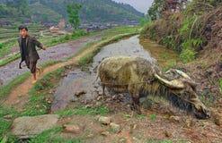 Asiatischer ländlicher Landwirt, Führungswasserbüffel gebunden an einem Seil. Lizenzfreie Stockfotos
