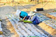 Asiatischer Landwirt, der im Hydroponikbauernhof arbeitet Stockbild