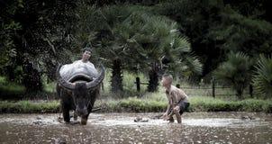 Asiatischer Landwirt und Sohn, die mit seinem Büffel arbeitet Lizenzfreies Stockfoto