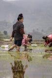 Asiatischer Mädchenlandwirtreis, der das Arbeiten, Verpflanzungssämling pflanzt Lizenzfreie Stockfotografie