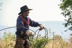 Asiatischer Mann-Cowboy f?ngt das in einer Ranch eingebrannt zu werden Kalb, lizenzfreies stockbild