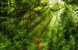 Asiatischer Regen-Wald Stockfoto