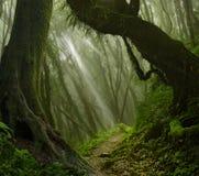 Asiatischer Regen-Wald Stockfotografie