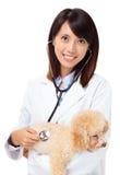 Asiatischer Tierarzt mit Pudel stockfoto