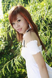 Asiatisches Baumuster Stockbild