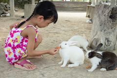 Asiatisches kleines chinesisches Mädchen, das ein Kaninchen mit Karotte einzieht stockfotos