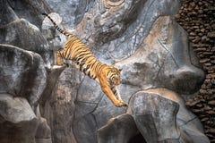 Asiatisches Tigerspringen lizenzfreie stockfotos