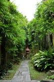 asiatisk bambuliggande Arkivbild