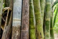 Asiatisk bambuskog - abstrakt bakgrund Fotografering för Bildbyråer