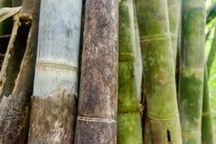 Asiatisk bambuskog - abstrakt bakgrund Royaltyfria Bilder