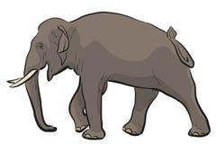 asiatisk elefant Royaltyfria Foton