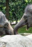 Asiatisk elefant ett mycket enormt djur Royaltyfria Foton