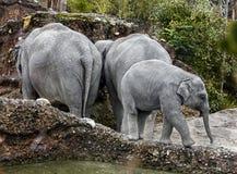 Asiatisk elefantfamilj Royaltyfri Fotografi