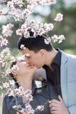 Asiatisk flicka- och europégrabb som kysser bland av att blomstra mandel b Royaltyfri Fotografi