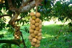 Asiatisk frukt. Arkivbild