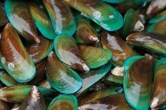 Asiatisk grön mussla arkivfoto