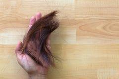 Asiatisk grupp för kvinnahandinnehav av klippt rödaktig brunt för snitt av Royaltyfria Foton