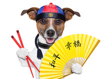 Asiatisk hund royaltyfri bild