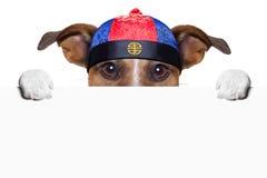 Asiatisk hund Arkivfoto