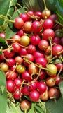 Asiatisk körsbärsröd frukt Royaltyfria Bilder