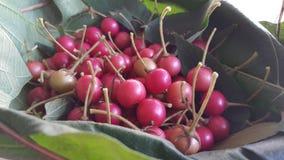Asiatisk körsbärsröd frukt Fotografering för Bildbyråer