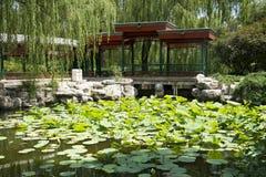 Asiatisk kines, Peking, zoo, den forntida arkitekturen, pionträdgård, korridor Arkivbild