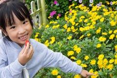 Asiatisk kinesisk liten flicka som poserar bredvid Bellisperennis fältet royaltyfria bilder