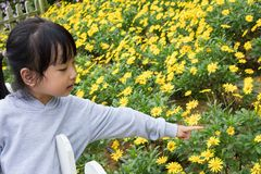 Asiatisk kinesisk liten flicka som poserar bredvid Bellisperennis fältet royaltyfri fotografi