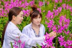 Asiatisk kvinna, forskare i den vita klänningen och att undersöka orkidéträdgården för forskning och utveckling av orkidéart arkivfoton