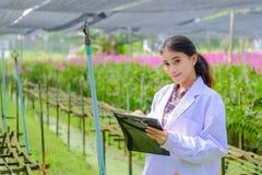 Asiatisk kvinna, forskare i den vita klänningen och att undersöka orkidéträdgården för forskningutveckling av ny orkidéart arkivfoto