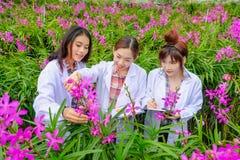 Asiatisk kvinna, forskare i den vita klänningen och att undersöka orkidéträdgården för ny orkidéart för forskning och för utveckl arkivbilder