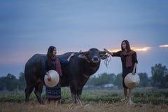 Asiatisk kvinna med en buffel Arkivfoton