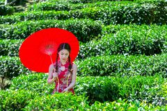 Asiatisk kvinna som bär klänningen för traditionell kines och det röda paraplyet i fält för grönt te fotografering för bildbyråer