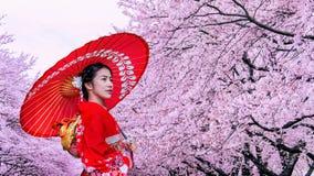 Asiatisk kvinna som b?r den japanska traditionella kimonot och den k?rsb?rsr?da blomningen i v?ren, Japan arkivbild