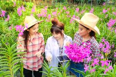 Asiatisk kvinnaforskare i den vita kl?nningen och att unders?ka orkid?tr?dg?rden f?r forskning och utveckling av ny orkid?art arkivfoto