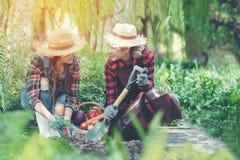 Asiatisk lycklig vänkvinnabonde som planterar organiska skördgrönsaker och att rymma skyffeln till hennes jobb i vingården utomhu arkivbild