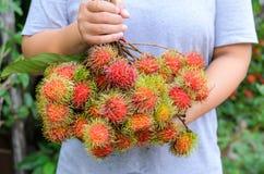 Asiatisk trädgårdsmästare med ny frukt (rambutanfrukt av Thailand) Arkivbild