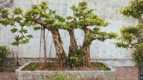 Asiatisk tropisk trädgård, Ninh Binh, Vietnam Arkivbild